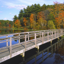 fall_bridge_000002626617Medium